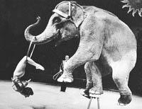 В советском цирке была МАССА интересного